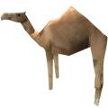 生存战争骆驼
