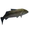 生存战争鲈鱼