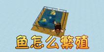 迷你世界迷你世界鱼怎么繁殖