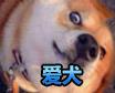西普大陆爱犬