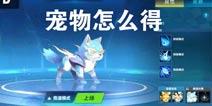 QQ飞车手游宠物怎么得 如何获得宠物