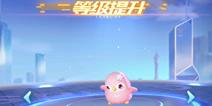 QQ飞车手游宠物怎么进化 宠物怎么升级