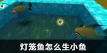 迷你世界灯笼鱼怎么生小鱼