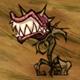 饥荒哈姆雷特捕蝇草怎么打 捕蝇草属性资料介绍