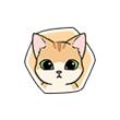 《小森生活》猫咪图鉴大盘点,小森生活小橘猫喜欢什么