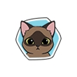 《小森生活》猫咪图鉴大盘点,小森生活巧克力猫喜欢什么