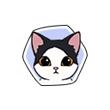 《小森生活》猫咪图鉴大盘点,小森生活王子猫喜欢什么