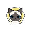 《小森生活》猫咪图鉴大盘点,小森生活团子猫喜欢什么