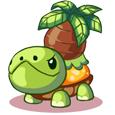 西普大陆绿椰龟