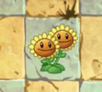 植物大战僵尸2双胞向日葵图鉴 技能