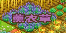 全民农场薰衣草种子怎么得 浪漫的紫色季节