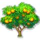 全民农场橙子树