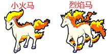 口袋妖怪3D小火马进化 小火马进化所需材料