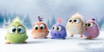 《愤怒的小鸟》电影圣诞特辑大曝光!