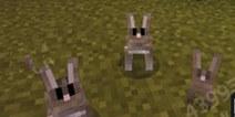 我的世界手机版兔子怎么驯服 0.13兔子怎么养