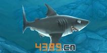饥饿鲨世界3D公牛鲨