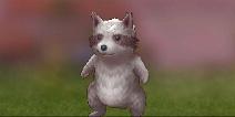 仙境传说ro狸猫刷新时间 守护永恒的爱狸猫在哪里