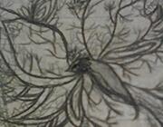 西普大陆手绘 血凰蝶