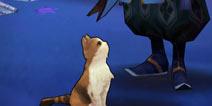 正确养猫姿势 阴阳师庭院宠物喂养心得