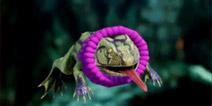 方舟生存进化恐龙宝宝怎么喂养 方舟生存进化手机版宠物怎么照顾