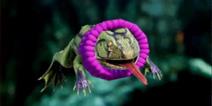 方舟生存进化动物项圈使用效果 方舟生存进化手机版宠物装饰介绍