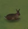 挨饿荒野兔子怎么抓 挨饿荒野兔子抓捕技巧
