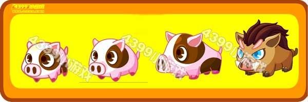 小花猪-蓝眼长毛猪变异进化图鉴及获得方法