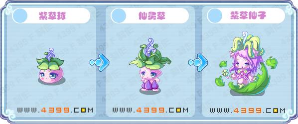 卡布西游紫草球 紫草仙子在哪 怎么抓