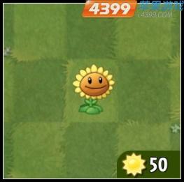 植物大战僵尸2向日葵