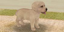 与狗狗的101种互动 《心动小狗》评测
