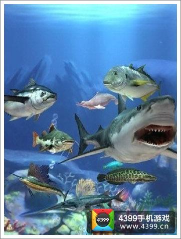 钓鱼发烧友游戏鱼类