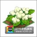全民小镇棉花种子建造时间 所需等级详细数据