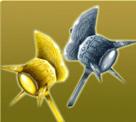 果宝三国金银战锤 双锤系金银战锤
