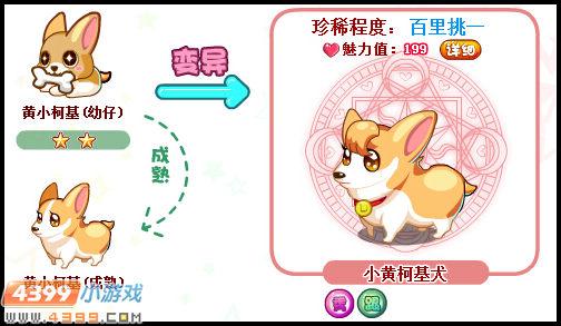 答:奥比岛小黄柯基犬在甜蜜牧场商店中用爱情结晶购买黄小柯基幼仔