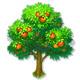 全民农场苹果树