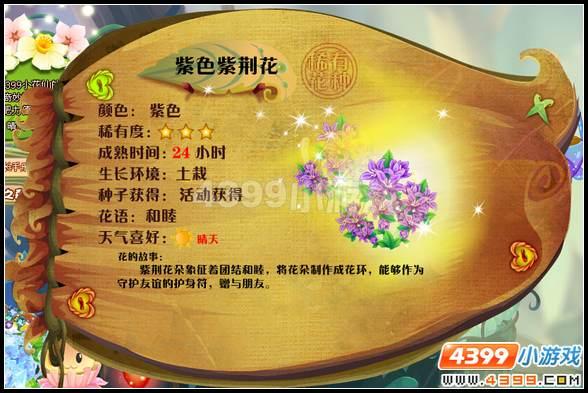 小花仙紫荆花 紫荆花花种