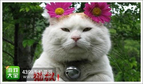 剑仙缘宠物2