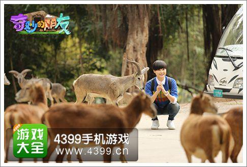 该剧正于广州长隆野生动物园拍摄