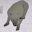 被尘封的故事北极熊