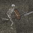 被尘封的故事骷髅长矛手怪物图鉴 骷髅长矛手介绍