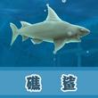 饥饿的鲨鱼:进化礁鲨