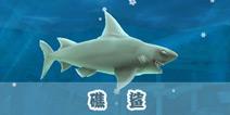 饥饿的鲨鱼礁鲨