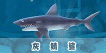 饥饿鲨:进化灰鲭鲨