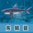 饥饿的鲨鱼:进化灰鲭鲨