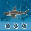 饥饿的鲨鱼:进化锤头鲨