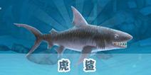饥饿的鲨鱼虎鲨