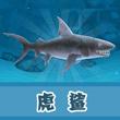 饥饿的鲨鱼:进化虎鲨