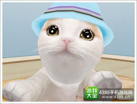 心动小猫手游评测