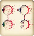泰拉瑞亚双子魔眼