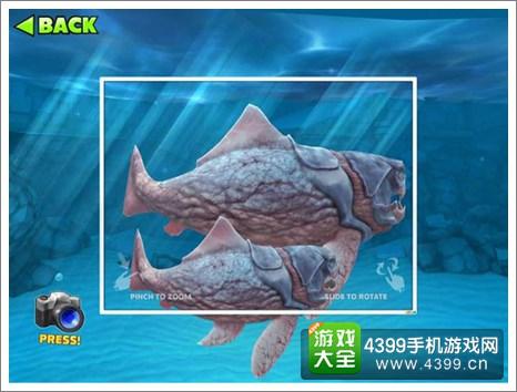 饥饿的鲨鱼进化邓氏鱼宝宝有什么用 邓氏鱼宝宝怎么得